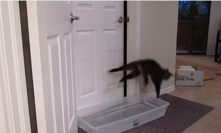 This Cat Knows How To Opens Doors. No Room is Safe.
