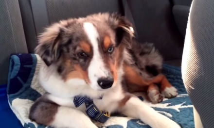 Puppy Wakes Up, Sings Frozen's Let It Go, Goes Back to Bed. Someone Get Disney on the Phone!