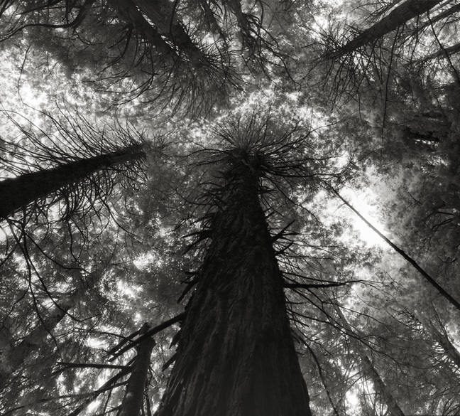 Majestic Trees From Around the World.