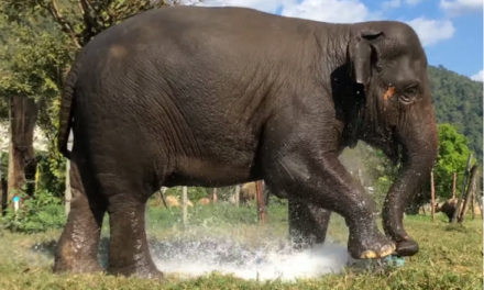 Elephant Takes a Shower in the Most Destructive Way Possible.