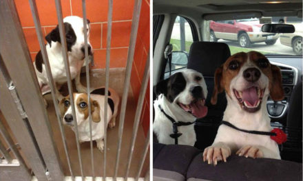 18 Dogs that were WAY Happier After Being Adopted.