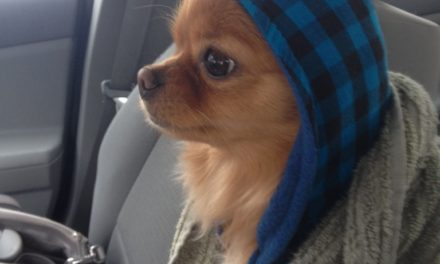These Pets Are Definitely Ready For Winter.