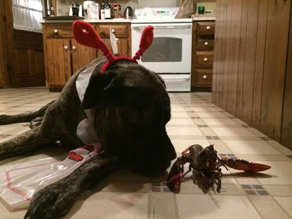 dyingdog3