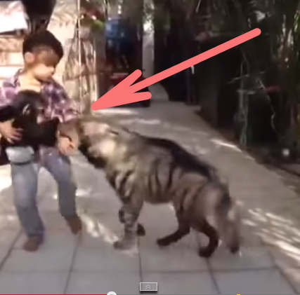 Little Boy Fights to Save His Pet Monkey.