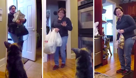 This Mom Got Pranked By a Fake Dog 5 Times In A Row.