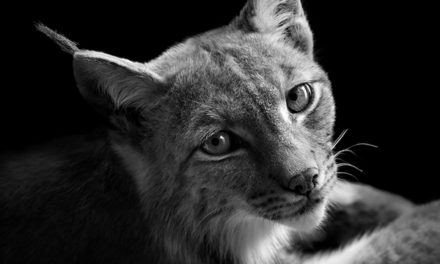 26 amazing black and white animal portraits