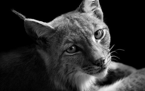 26 amazing black and white animal portraits
