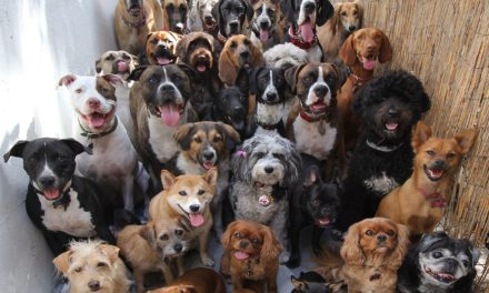 30 Dogs Smiling for the Camera