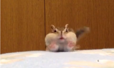 A Fluffy Gerbil GIF to Improve Your Day.