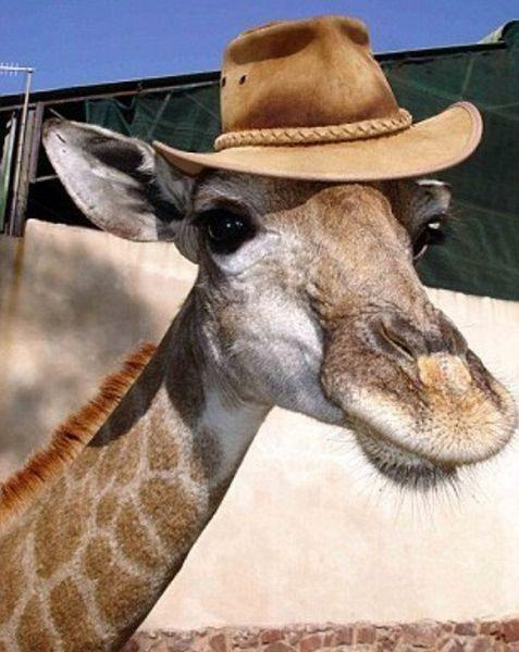 animals-in-hats-11