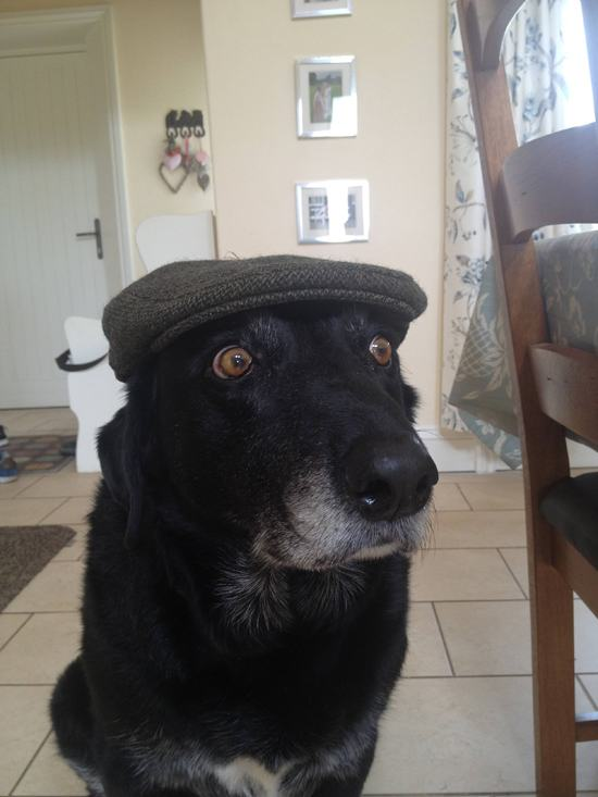 animals-in-hats-13