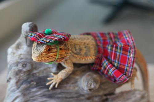 animals-in-hats-17