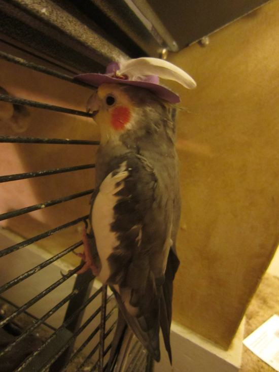 animals-in-hats-18