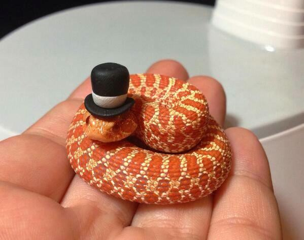 animals-in-hats-19