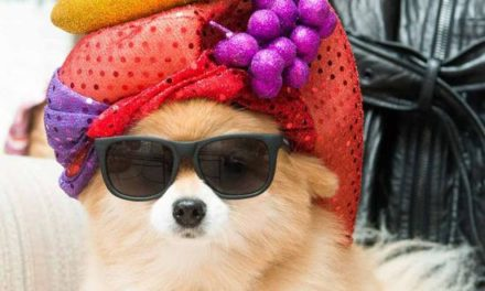 21 Pictures of Animals in Fabulous Hats.