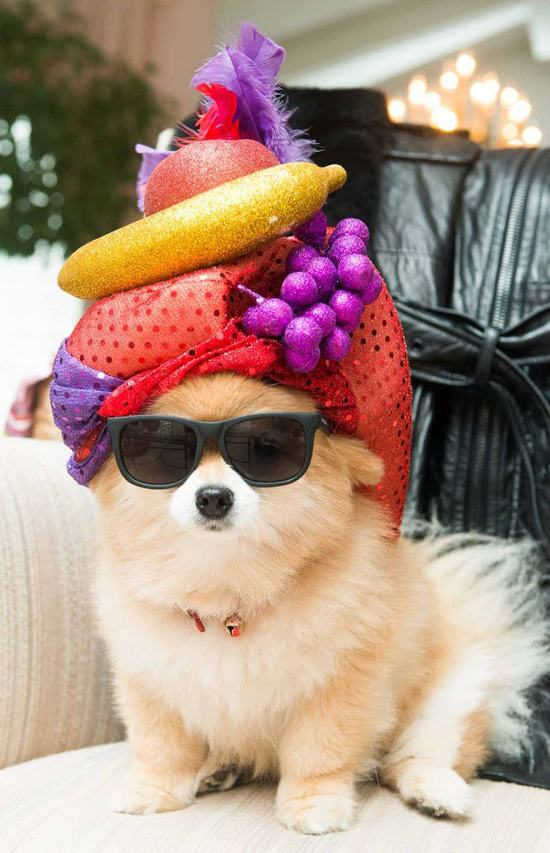 animals-in-hats-3