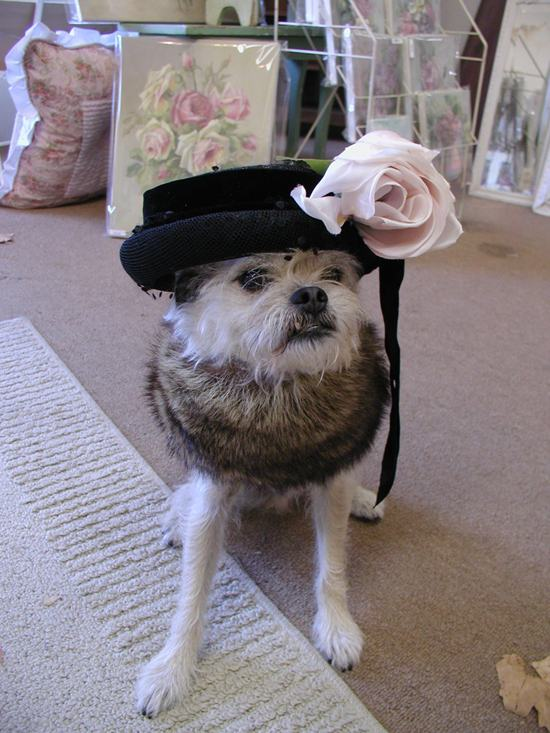 animals-in-hats-6