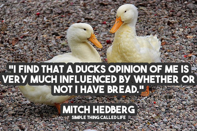 I Find That A Ducks Opinion Of Me Is Very Much Influenced