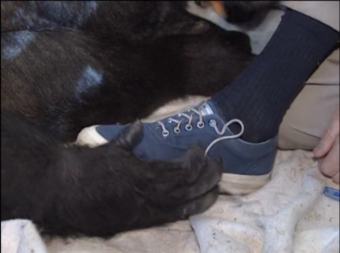 Mr-Rogers-Koko-Shoes-1