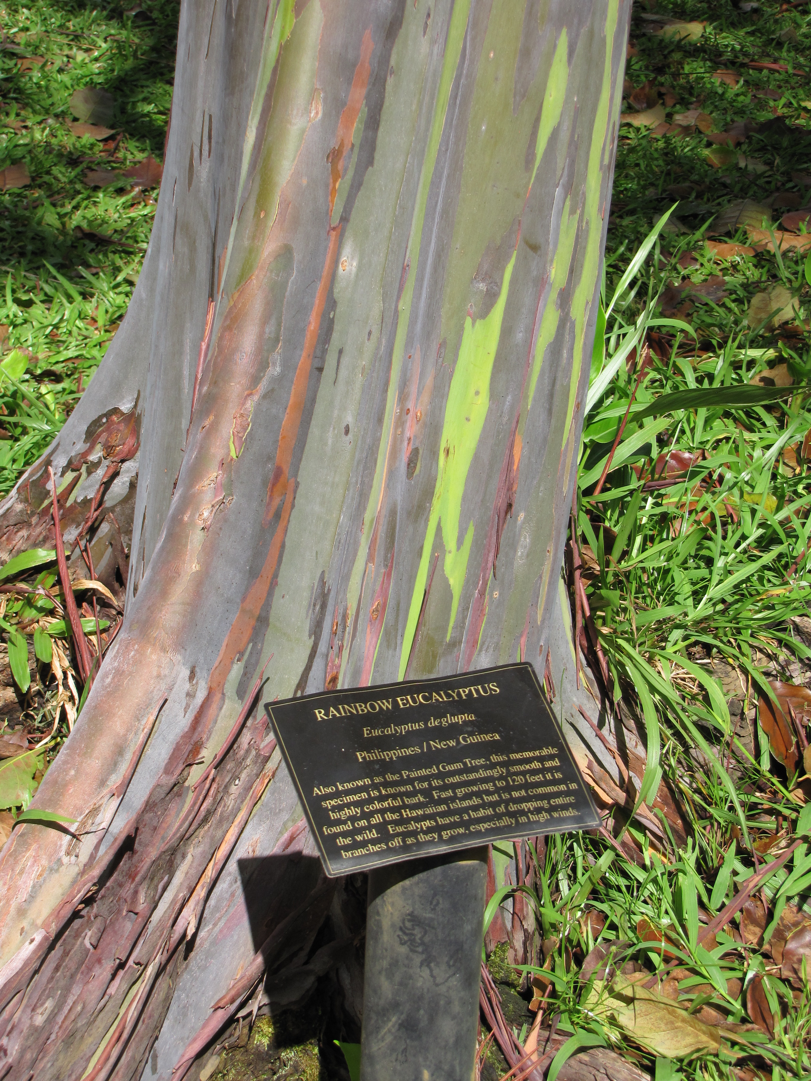 Ever Seen a Tree Made of Rainbows? Here\'s one. - Simple Thing Called ...