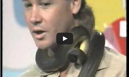 Steve Irwin Gets Bitten By a Snake. Shows Snake Who's Boss.