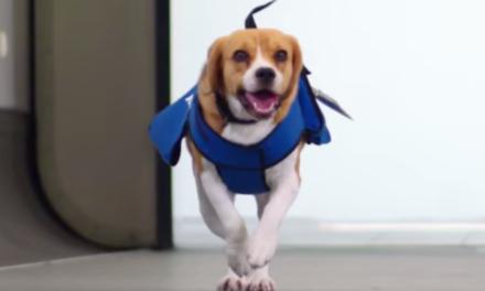 This Dog is More Useful than the TSA.