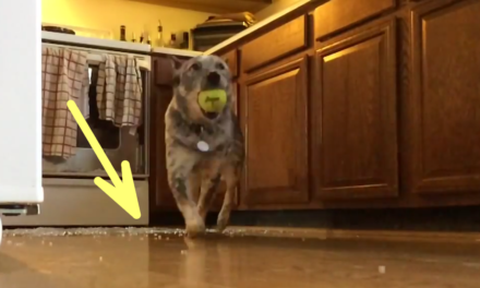 Dog Destroys Oven to Get to His Ball