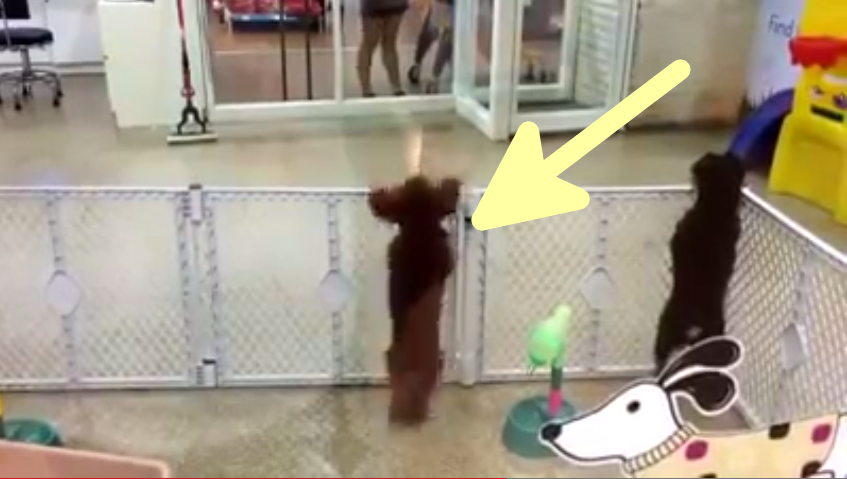Puppy Does the Salsa! This Video is Awesome.