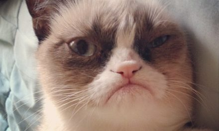 The Grumpiest Cats of All Time.