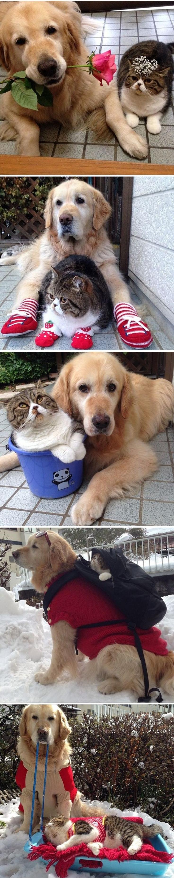 OMG the cutest best friends in the whole world. - Imgur