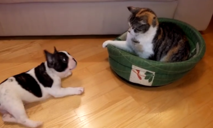 Cat Steals the Dog's Bed.