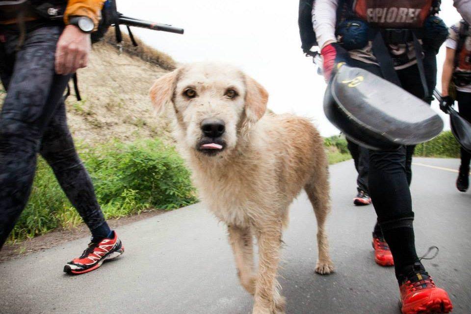 Dog Treks Through Rainforest for Family.