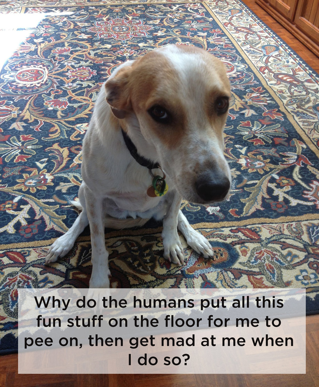 dogshowerthoughts15