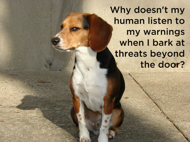 16 Things Your Dog Thinks About Every Day.