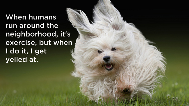dogshowerthoughts8