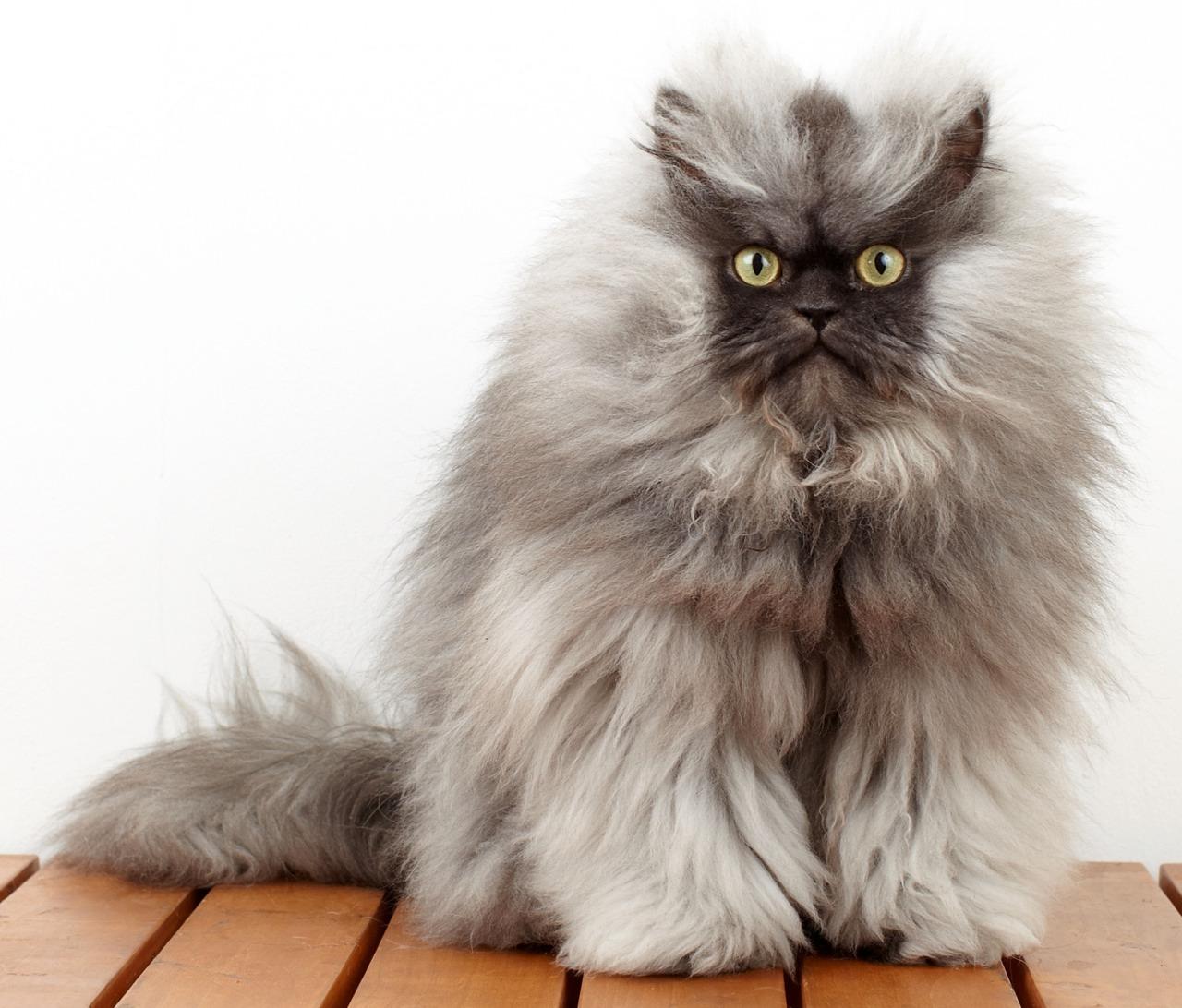 grumpycat4