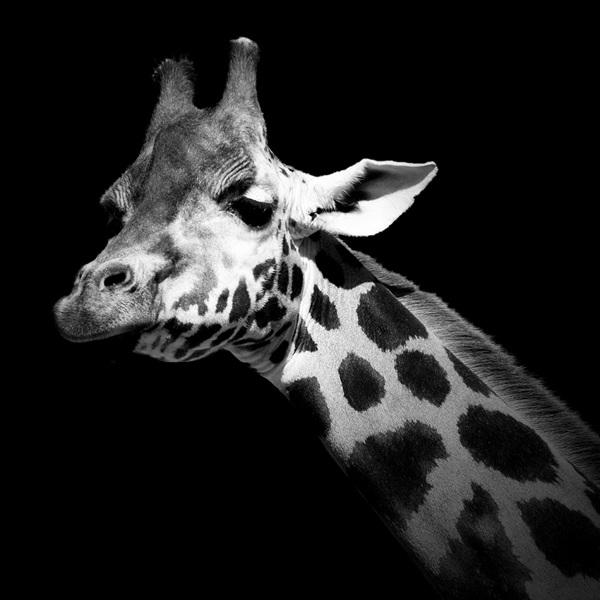 Animal-Portraits-12