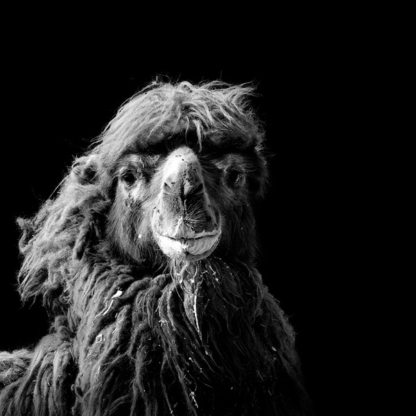 Animal-Portraits-14