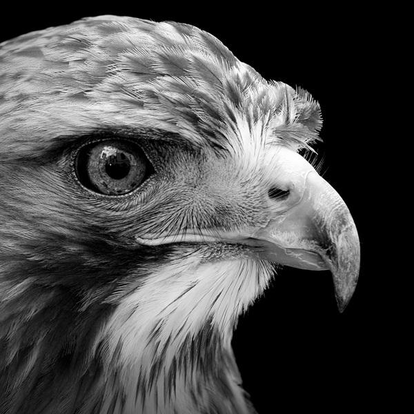 Animal-Portraits-5