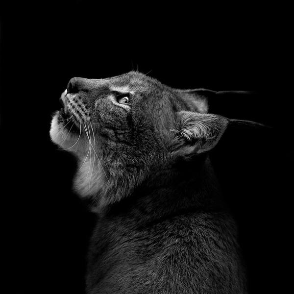Animal-Portraits-6