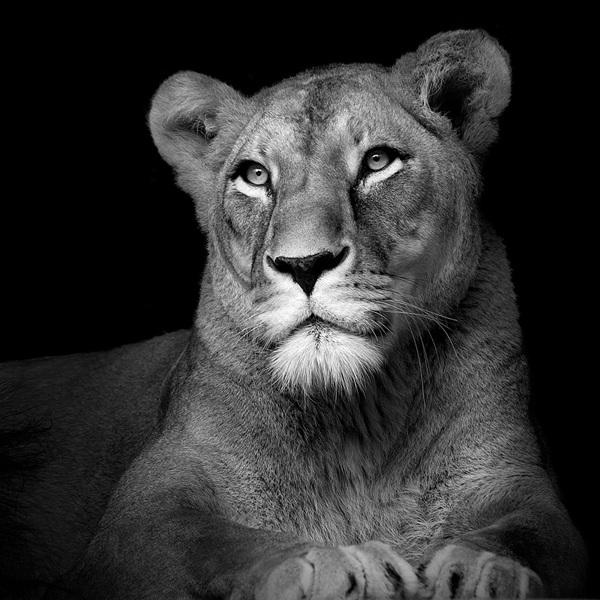 Animal-Portraits-9