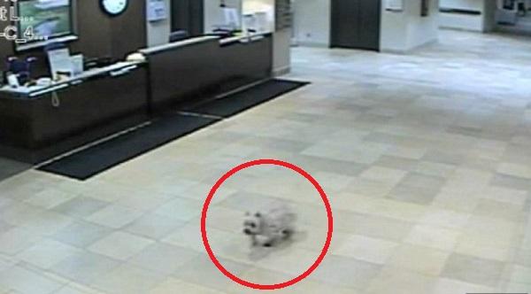 determined-dog-finds-sick-owner-2