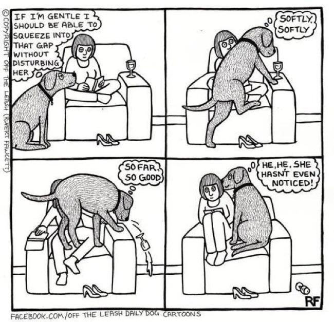 dogstruggles17