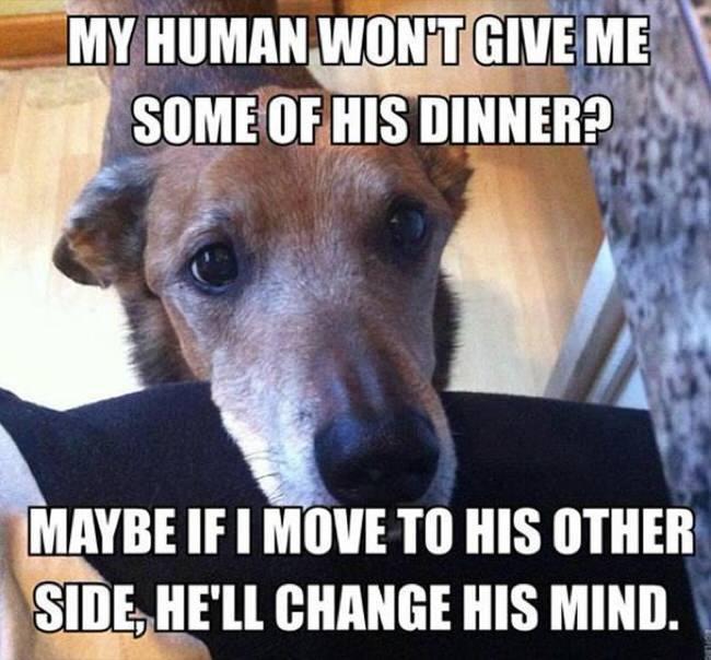 dogstruggles2