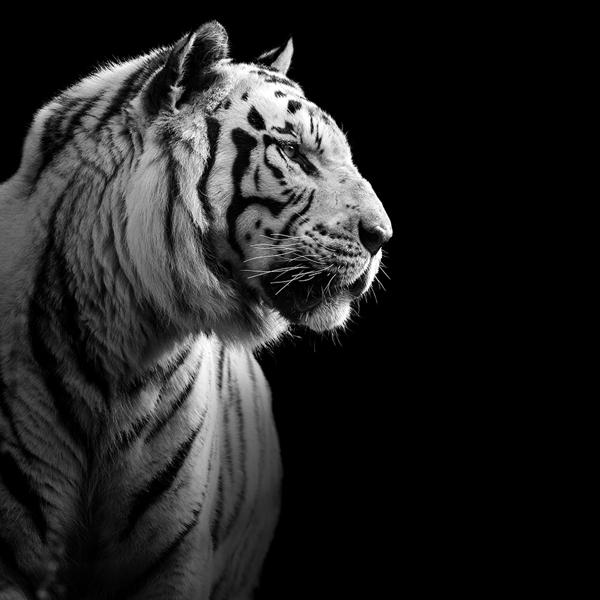 portraits-of-animals-10