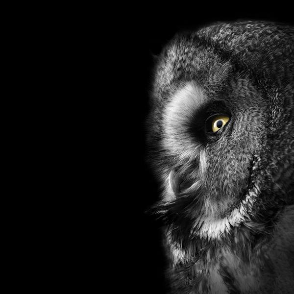 portraits-of-animals-11
