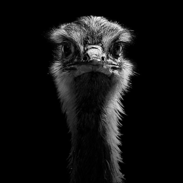 portraits-of-animals-12