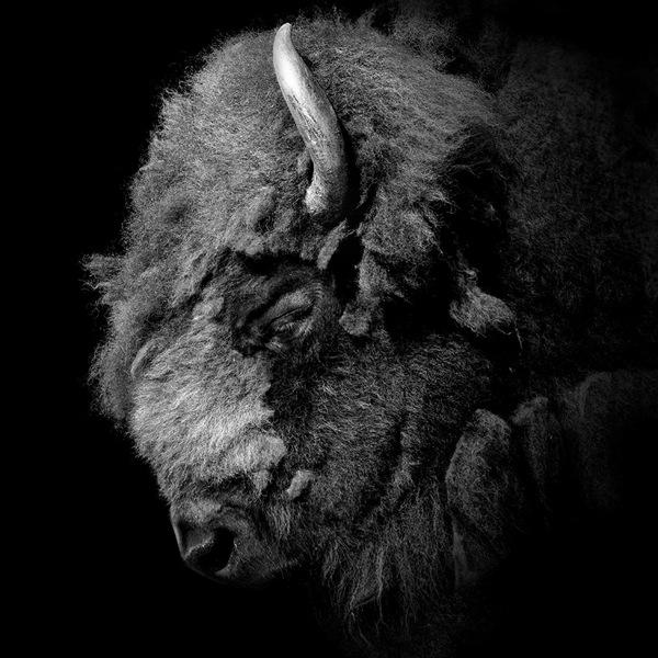 portraits-of-animals-2