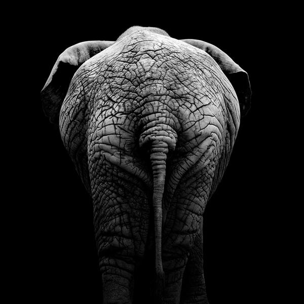 portraits-of-animals-3