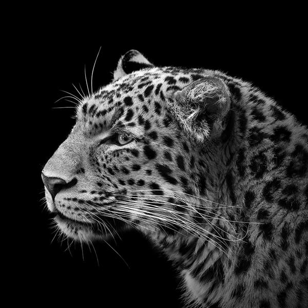 portraits-of-animals-5